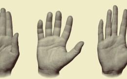 Luận giải tính cách qua từng ngón tay và bàn tay: Người tay to thường cầu toàn