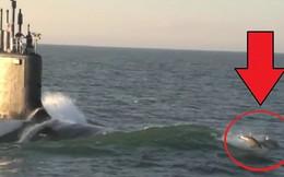 Video: Cảnh tượng cá heo đua tốc độ với tàu ngầm Mỹ