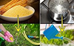 Nếu yêu thích làm vườn, hãy học ngay 8 cách diệt cỏ dại bằng nguyên liệu tự nhiên vừa hiệu quả vừa an toàn