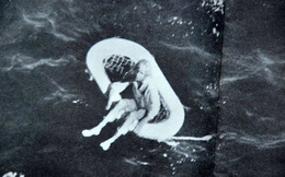 Bức ảnh đứa trẻ mồ côi lênh đênh trên biển hé lộ vụ thảm sát gia đình 4 người đáng sợ, chuyến nghỉ dưỡng hóa bi kịch sau 1 đêm
