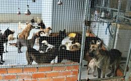 Cặp vợ chồng Cần Thơ được đầu tư 400 triệu xây nhà nuôi chó, mèo hoang