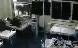 Đang nằm trong bệnh viện, bệnh nhân bị xe tải đâm thẳng vào giường bị thương