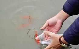 Thả cá chép đúng cách trong lễ cúng ông Công ông Táo