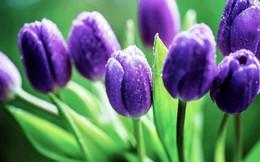 Cảnh giác với những loài hoa đẹp nhưng…độc