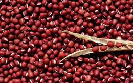 Những loại thực phẩm mát gan giải độc, tốt cho người gan yếu
