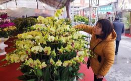 """Dân đổ xô mua hoa chơi tết, giá lan """"thổi"""" lên chóng mặt"""