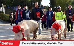 Công ty Trung Quốc 'chơi trội' khi thưởng Tết nhân viên xuất sắc 2 con lợn