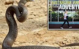 Một vườn thú ở Úc cho phép khách tham quan lấy tên người yêu cũ đặt cho rắn