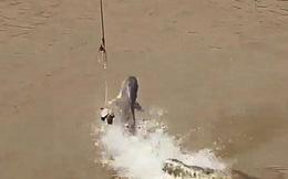 Cá mập tung mình 'nhanh như chớp' tranh công cướp mồi của cá sấu