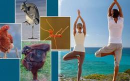 Đứng một chân: Hiệu quả dưỡng sinh đáng kể