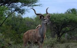 Những loài động vật lạ kỳ chỉ có thể tìm thấy ở châu Phi