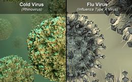 Dấu hiệu nhận biết bệnh cúm và cách phân biệt với cảm lạnh