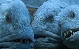 """Con người đã vô tình đẩy loài cá """"xấu thảm thương"""" này vào cảnh tuyệt chủng và đây là câu chuyện đằng sau"""