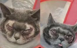 Trung Quốc: Sự thật về vụ nhà giàu chơi trội mang mèo đi phẫu thuật thẩm mỹ mắt