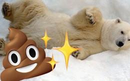 Gấu trắng Bắc Cực khắp Bắc Mỹ đang cho ra những cục phân... phát sáng và đây là lý do