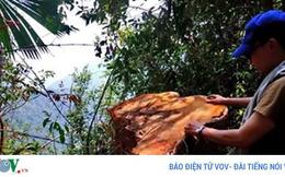Kỷ luật 6 cán bộ để xảy ra phá rừng phòng hộ Tả Trạch