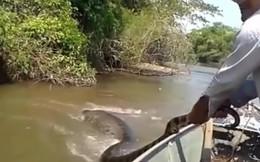 Video: Hoảng hồn đụng độ trăn khủng Anaconda trên sông Amazon