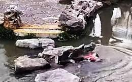 Đi chơi công viên, 2 bà cháu trượt chân ngã xuống hồ sâu và hành động của người bà khiến mọi người xúc động