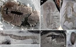 Trung Quốc: Phát hiện hàng chục ngàn hóa thạch 500 triệu năm tuổi