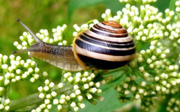 Top 10 loài động vật chậm chạp nhất thế giới tự nhiên