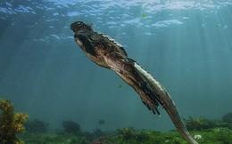Sinh vật lạ uy hiếp hàng trăm loài ở hòn đảo đẹp nhất thế giới