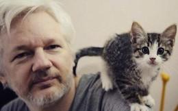 Ông chủ WikiLeaks bị tố 'ở bẩn' khi tị nạn trong sứ quán Ecuador