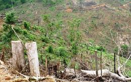 Bình Định: Khởi tố vụ án phá 11.300m2 rừng tự nhiên