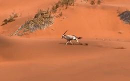 Thử thách dạo chơi với động vật nguy hiểm chết người: Không thể tin đây là video quay bằng iPhone!