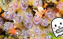 Pha dậy thì thất bại của loài hải tiêu: Lúc nhỏ xinh xắn, lớn lên xấu xí tự xơi não mình