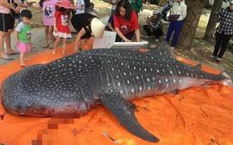 Cá mập bị xẻ thịt ở Thanh Hóa có nguy cơ tuyệt chủng rất lớn