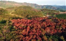 Khởi tố, bắt giam 3 đối tượng trong vụ đầu độc gần 11ha rừng
