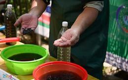 Mùi hôi tại sông Tô Lịch đã giảm nhờ công nghệ của Nhật sau gần 3 tuần