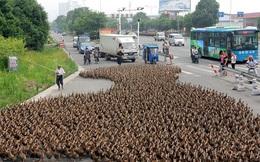Không cần tới công nghệ cao siêu, Trung Quốc sử dụng 'độc chiêu' này để chống lại cuộc xâm lăng từ 400 tỷ con châu chấu