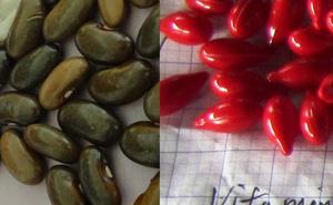 Tạm đình chỉ y tá vụ trẻ uống vitamin A bằng hạt đậu