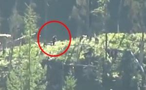 Video hot trong tuần: Xuất hiện quái vật Bigfoot ở Canada