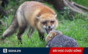 Chuyện thỏ non xơi tái sói già: Diễn biến bất ngờ, triết lý thâm thúy ai cũng nên đọc!