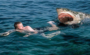 Không ngờ nhờ cách đấm lia lịa vào con cá mập mà chàng trai này đã thoát chết