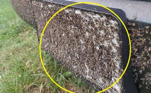 """Siêu bão Harvey vừa tan, xuất hiện đàn muỗi hàng triệu con """"xâm chiếm"""" Texas"""