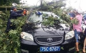 """Bão giật cấp 15 di chuyển """"thần tốc"""", sát mức thảm hoạ, cây xanh bị giật đổ đè bẹp xe biển xanh"""
