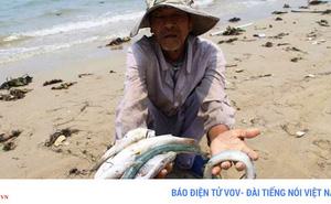 Một năm sau sự cố môi trường: Biển hồi sinh, hải sản tươi ngon