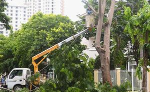 """Hà Nội: """"Cuộc cách mạng"""" cắt sửa cây xanh và những thành quả ấn tượng"""