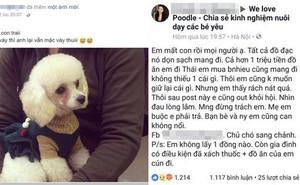 Cưu mang chú chó từ khi nó ốm nặng, cô gái đau lòng trả lại vì chủ cũ thấy đẹp bỗng đòi