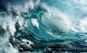 Cá heo, mòng biển, mạng nhện: Đừng bỏ qua những dấu hiệu bởi cơn bão sẽ đến!
