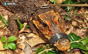 Bí ẩn loài cá sấu màu da cam kỳ dị, chuyên ăn dơi và sống trong hang sâu ở Gabon