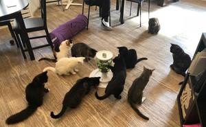 """Cô nàng số nhọ: Đi cà phê mèo về bỗng tốn thêm 720 nghìn tiền chữa bệnh vì bị bọ nhảy đốt """"tan nát"""" tay"""