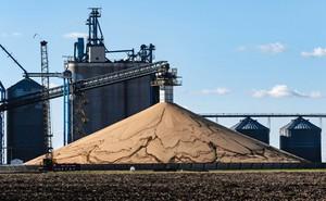 Người Mỹ ngậm đắng nhìn đậu nành chất cao như núi, lo trắng tay khi kết thúc chiến tranh thương mại
