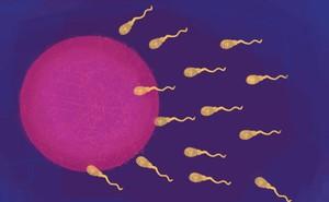 Vụ việc tại Trung Quốc còn chưa lắng xuống, đã có nhà khoa học Harvard tuyên bố sẽ chỉnh sửa gen tinh trùng người tại Mỹ
