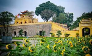 Vẫn thường đến Hoàng Thành Thăng Long mỗi dịp xuân về, bạn biết gì về nơi này?
