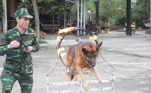 """Biệt đội chó đặc nhiệm và chuyện chưa kể về """"vật thể lạ"""" khi đón Tổng thống Trump"""
