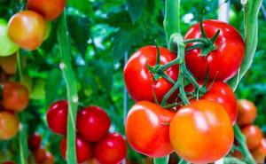 Hệ luỵ khi lạm dụng chất kích thích sinh trưởng trong trồng trọt